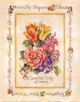 Camellia, Tulip & Primrose