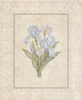 Irises (*)