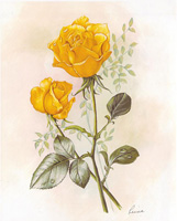 Yellow Rose (*)