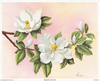 Magnolias I (*)
