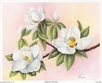 Magnolias II (*)