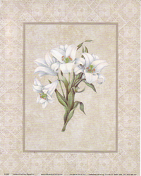 Lilies (*)