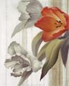 Tulip sur Papier (*)