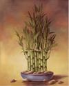 Bamboo I (*)