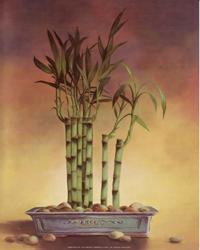 Bamboo II (*)