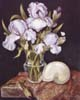 Purple Iris with Shell