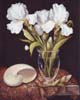 White Iris with Shell