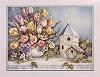 Sibley Tulips/Birdhouses (*)