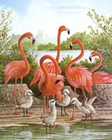 Flamingo (*)