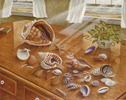 Seashells II (*)