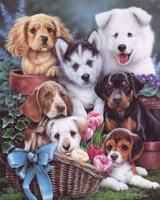 Puppies I