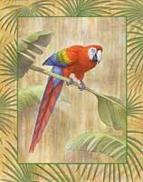 Scarlet Macaw (*)