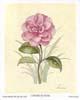 Camellia (S) (*)