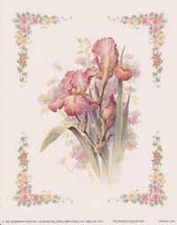Pink Iris (*)