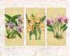Tropical Orchid II (L) (*)