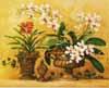An Orchid Renaissance