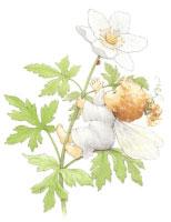 Blossom Tots Fairies IV (S) (*)