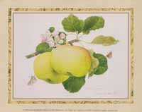 Antique Apples (*)