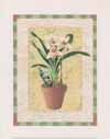 Potted Cymbidium (*)