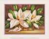 Blossoming Magnolias (*)