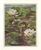 Durgin Frog in Lily Pond (*)