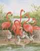 Flamingo (ML) (*)