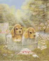 Spaniels in Tub
