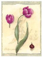 Tulips (*)