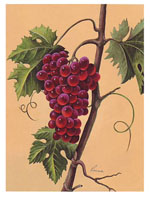 Red Grapes (*)