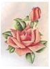 Peach Roses (*)