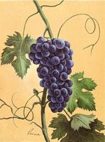 Blue Grapes (*)