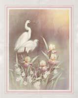 Chiu Cranes (*)