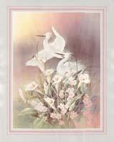 Chiu Egrets (*)